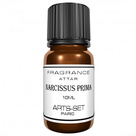 Narcissus Prima